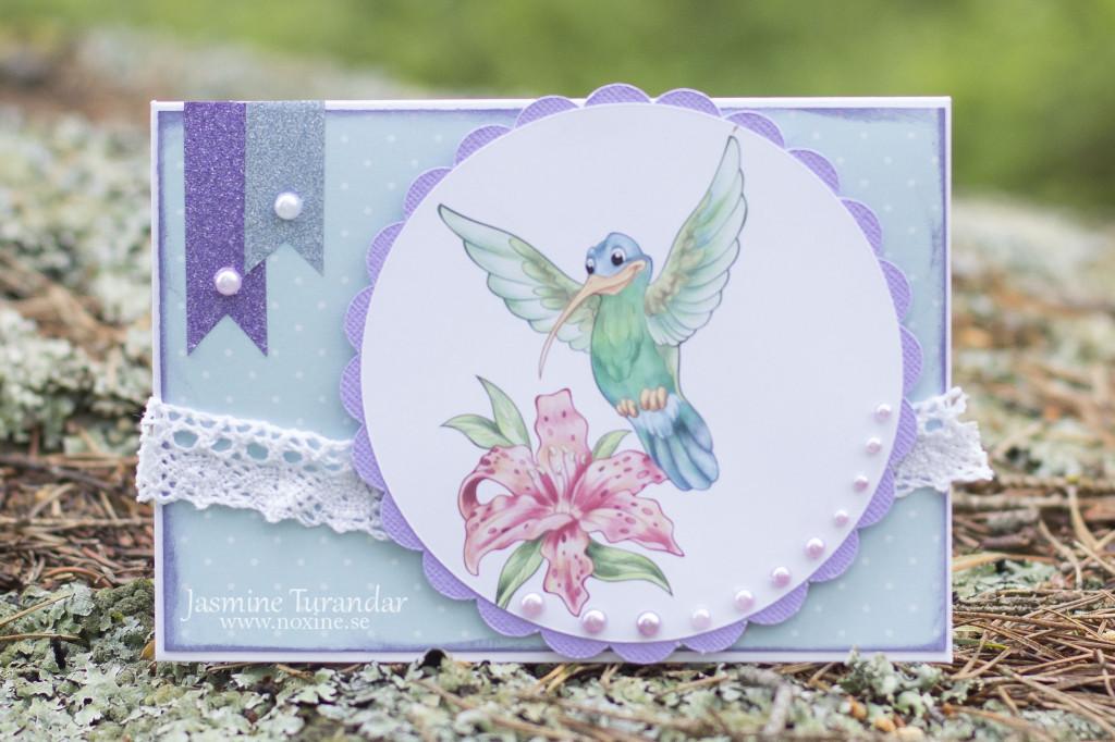 2015 06 TPS Cheerful Hummingbird